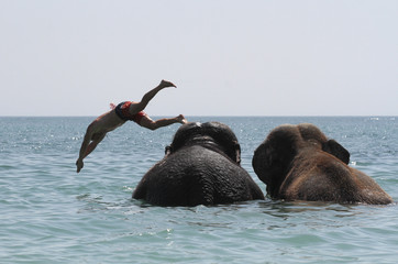 A trainer dives as elephants from a local circus bathe in the waters of the Black Sea in Yevpatoria