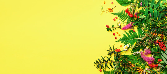 Ingredients of herbal alternative medicine, holistic and naturopathy approach on yellow background. Herbs, flowers for herbal tea. Top view, copy space, flat lay