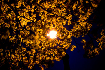 фонарь lamp lantern