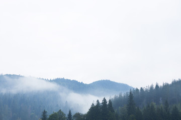 Mountain forest fog, pine tree landscape. Nature woods in mist.