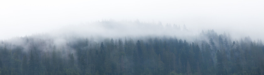 Mountain foggy background, forest fog, mist landscape.