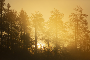 Sunrise on forest, Finland.