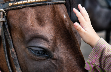 hippotherapy concept, animal friendship horse and kid's hand