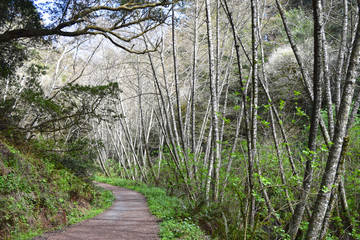 Pt. Reyes, California birds and trails