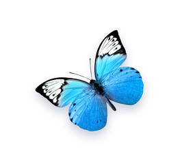 Blue butterfly isolated on white background. Beautiful insect.