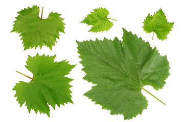 Grape leaves isolated on white background, top view
