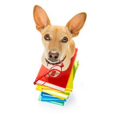smart dog and books