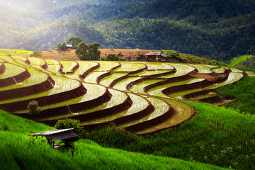 Autocollant pour porte Les champs de riz beautiful landscape view of rice terraces and house at chiang mai , Thailand. The village is in a valley among the rice terraces. Terraced Paddy Field in Mae-Jam Village chiang mai , Thailand.