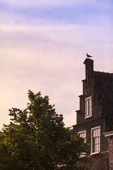 At Dutch Seaside Town / Dutch ancient house facade with seagull bird up at top of roof in twilight (copy space)