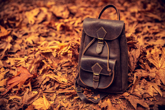 Leather backpack in autumn forest