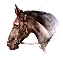 painted colored of an animal horse side