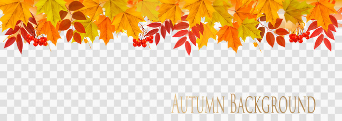 Abstract autumn panorama with colorful leaves on transparent background Vector Wall mural