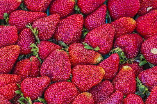 Fresh California strawberries red ripe for eating