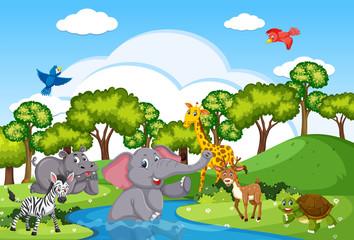 Wild animals living near river