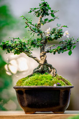 Printed kitchen splashbacks Bonsai Backgrounds, seedlings in the plant pots (ornamental plants for garden decoration) for decorating the home and restaurant to refreshing customers.