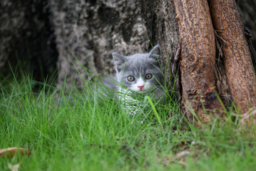 The kitten playing on the grass