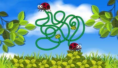 lady bug maze concept