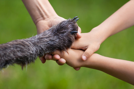 hands of family and paw of dog