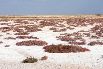 Etosha vegetation