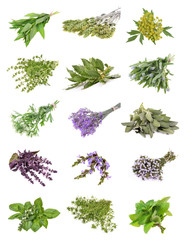 Set of fresh herbs   on an isolated white background