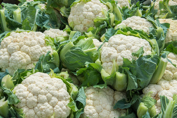 Group of cauliflowers with green leaves