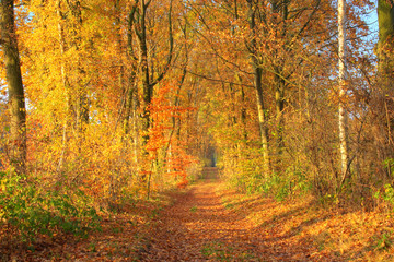 Golden autumn day. Beautiful view of a forest path with autumn trees, Lüneburg Heath. Northern Germany