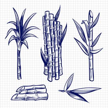 Hand drawn sugar cane set vector illustration
