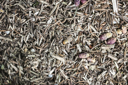 mulch for flowers from withered plants,