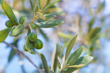 Background with the image of olives