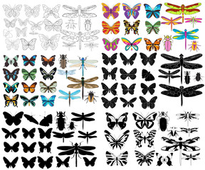 vector, isolated, insect set of butterflies and dragonflies