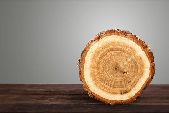 Wooden log isolated on white background
