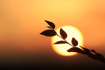 tree twig on sunset background