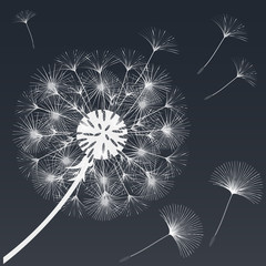 Abstract background of a dandelion for design.