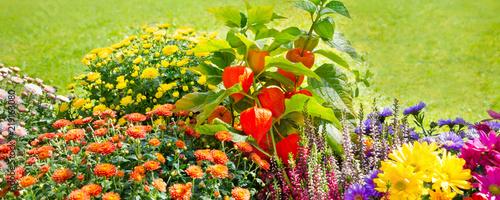 Herbst Blumen Im Garten Photo Libre De Droits Sur La