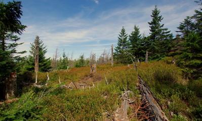 Dzika natura - krzewy, lasy, krzaki pozostawione bez ingerencji człowieka - dzikość leśnej przyrody
