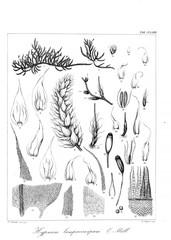 Illustration of algae