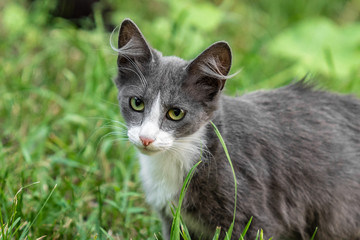 Sinlge street kitten sitting in grass