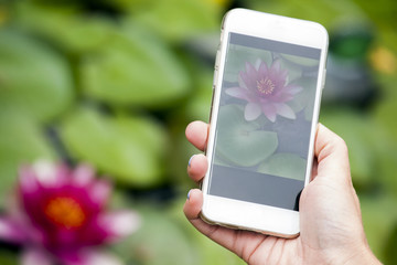 hand smartphone water lily