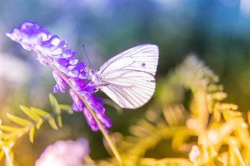 Lavender flower meadow and butterfly flying by. Summer sun flares, sunset rays of light and fresh green leaves make beautiful bokeh. Macro close soft focus. Lovely fairy tale landscape, dreamy mood.