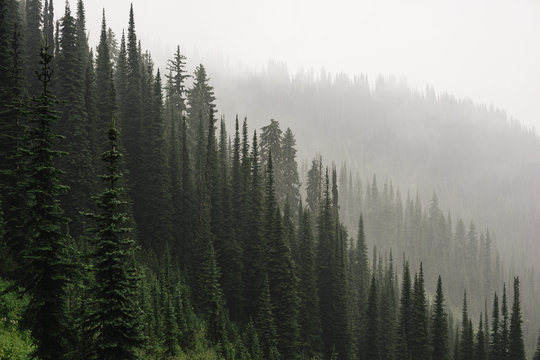 Smokey Trees on Idaho Peak
