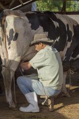 Ordenha leiteira manual em pequena propriedade rural de Guarani, estado de Minas Gerais, Brasil