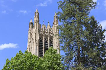 Foto op Canvas Barcelona St. Johns Cathedral behind trees.