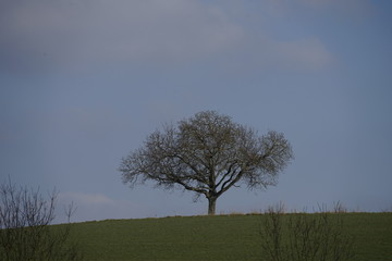 Baum ohne Laub am Horizont