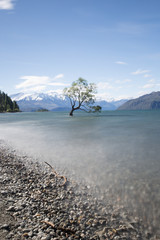 Wanaka tree New Zealand 2