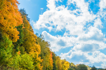 Beautiful autumn forest. Yellow, orange and green trees against the blue sky