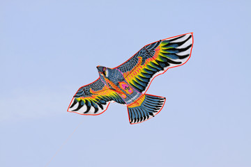 eagle modelling kite