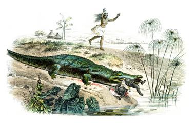 The crocodile, vintage engraving.