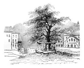 The Linden Freiburg, vintage engraving.