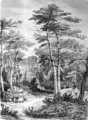 A View in the forest of Arcachon, vintage engraving.
