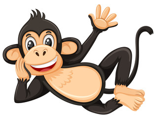 A monkey on white background